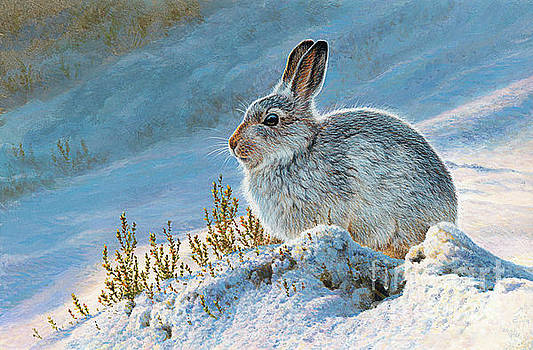Andrew Hutchinson - Mountain Hare