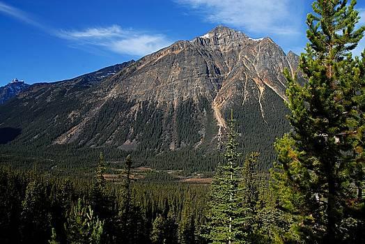 Larry Ricker - Mountain View 2