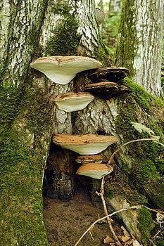 James Steele - Mushroom Village