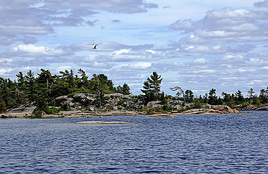 Debbie Oppermann - Nature Of The North