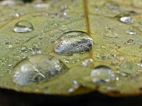Juergen Roth - November Rain