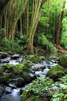 Charmian Vistaunet - Pali Forest II