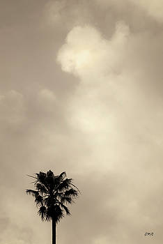 David Gordon - Palm Tree and Clouds Toned