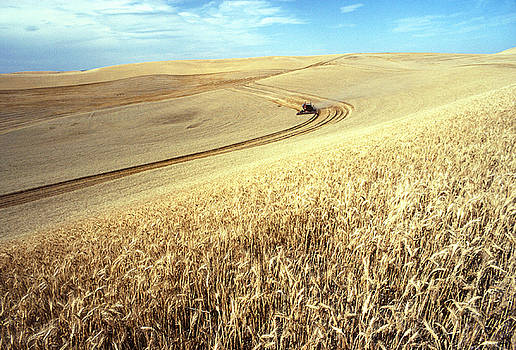 USDA and Photo Researchers - Palouse Wheat