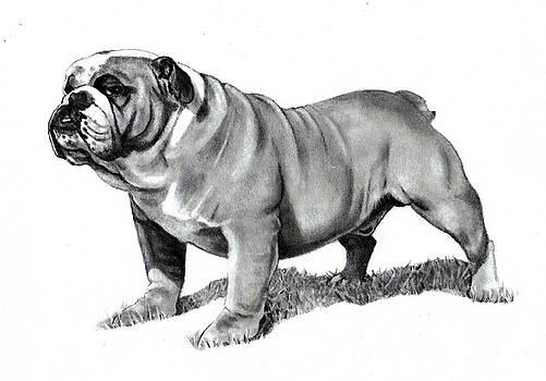 Joyce Geleynse - Pencil Drawing of a Bulldog