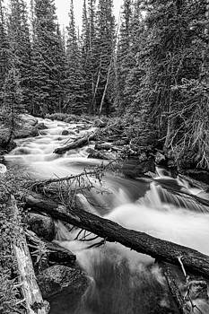James BO  Insogna - Pine Tree Forest Creek Portrait In Black and White