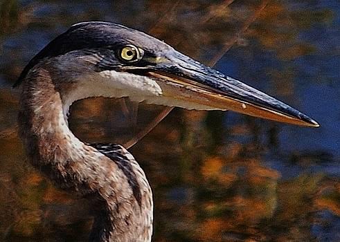 Joy Bradley - Profile Of A Blue Heron