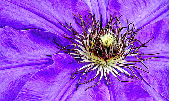 James Steele - Purple Clematis