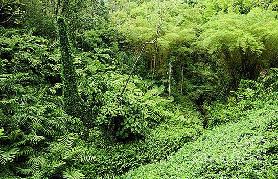 Charmian Vistaunet - Rainforest Overgrowth - Big Island