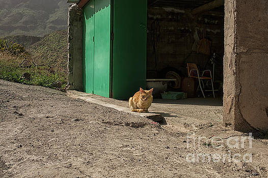Patricia Hofmeester - Red cat and green shed