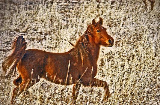James Steele - Red Horse Art