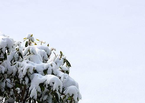 Anne Babineau - rhode to snow