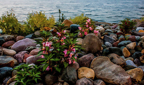 Joann Copeland-Paul - Rocky Shores of Lake St. Clair- Michigan