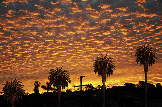Larry Butterworth - SAN DIEGO SUNRISE WITH PALM TREES