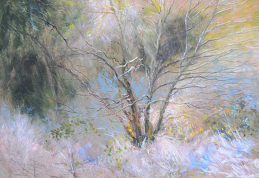 Harry Robertson - Sketch of Halation effect through Trees