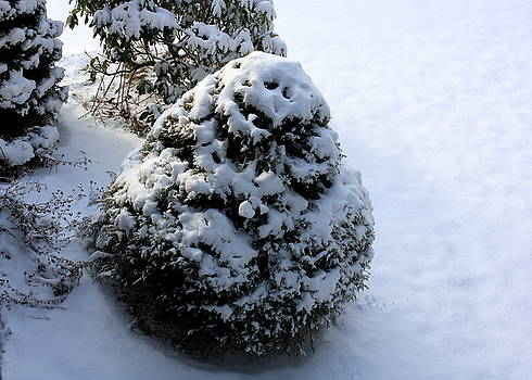 Anne Babineau - snowy morn