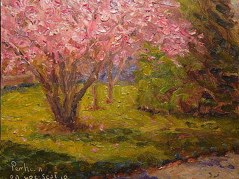 Terry Perham - Spring Blossom