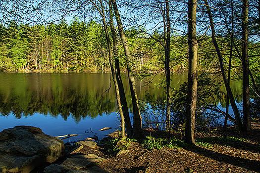 Karol Livote - Spring It The Woods
