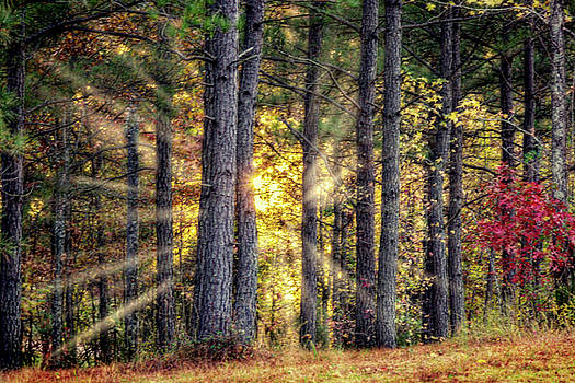 Barry Jones - Sunlight Through The Pines