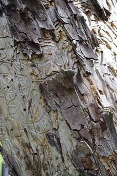 Marilyn Wilson - Texture in Nature