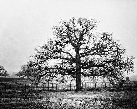 Lisa Russo - The Foggy Oak in Black and White