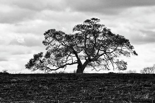 Scott Pellegrin - Tortue Oak