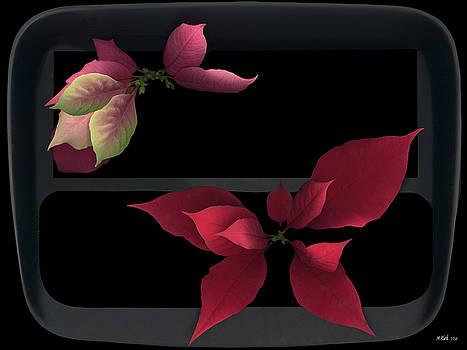 Heather Kirk - Two Poinsettias