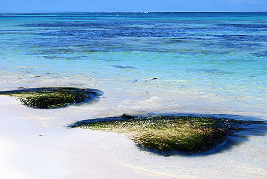 Heather Kirk - Two Seaweed Mounds on Punta Cana Resort Beach