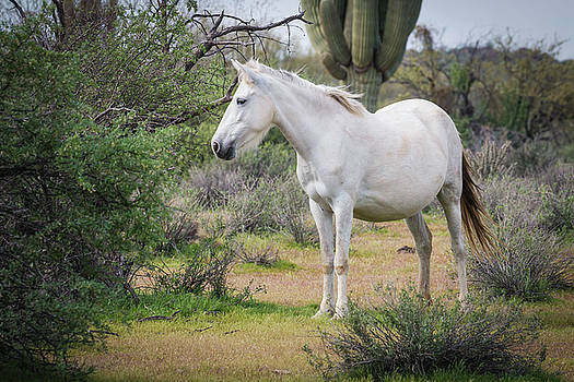 Rosemary Woods-Desert Rose Images - White Mare-IMG_743817