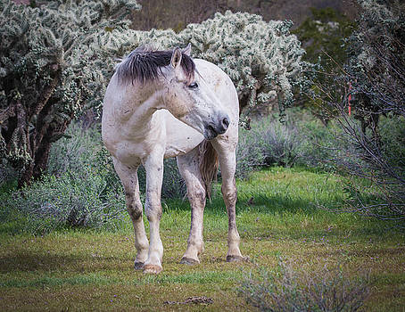 Rosemary Woods-Desert Rose Images - White Mare-IMG_7279-2017