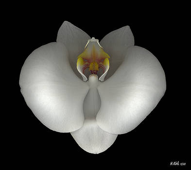 Heather Kirk - White Orchid on Black