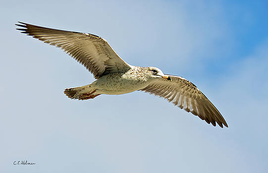 Christopher Holmes - Wings Aloft