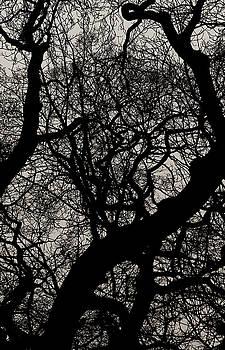 TONY GRIDER - Winter Canopy Two
