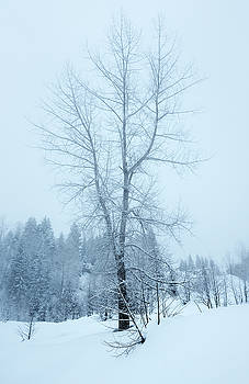 Svetlana Sewell - Wintry Tree