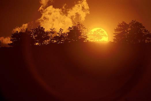 Jerry McElroy - Yellow Sun
