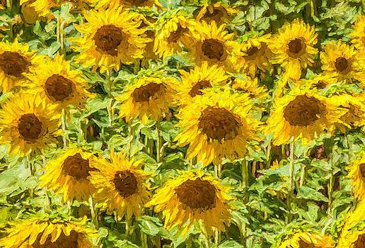 David Letts - Yellow Sunflowers