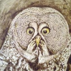 owl Art Competition
