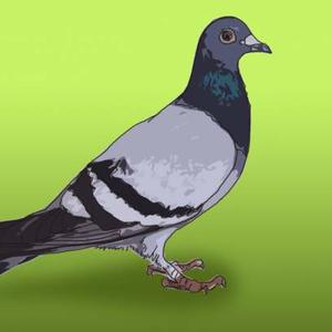 Pigeons and Doves Art Competition