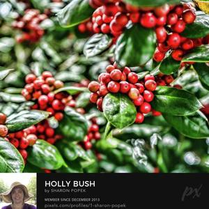 Weekly Photography Challenge Holly Berry Art Competition