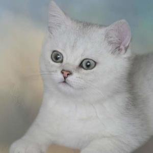White Cats and Kittens Art Competition