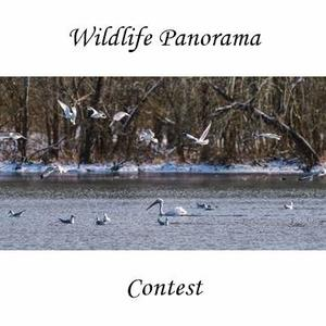 Wildlife Panorama's Art Competition