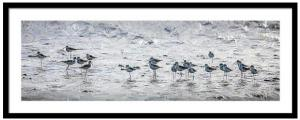 New Art Released - Sandpipers