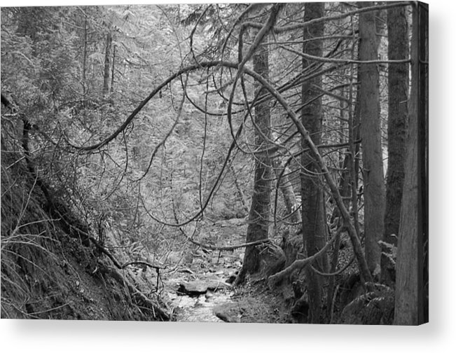 Black Acrylic Print featuring the photograph Seeking New Light by J D Banks