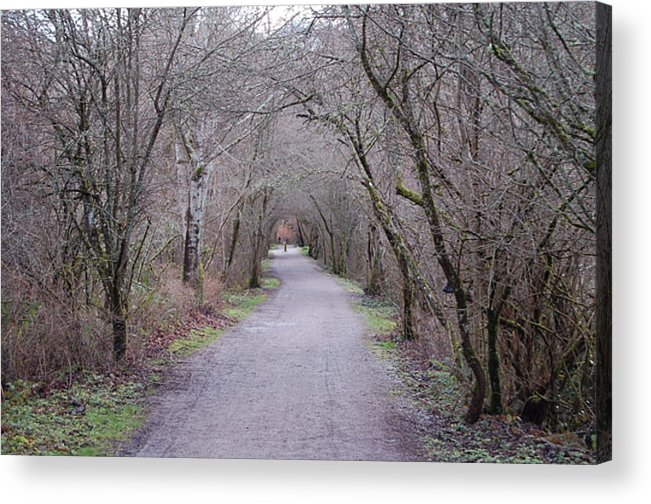 Nature Acrylic Print featuring the photograph Trail Tunnel by J D Banks