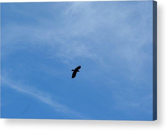 Bird Acrylic Print featuring the photograph Sky High by Lisa Hebert