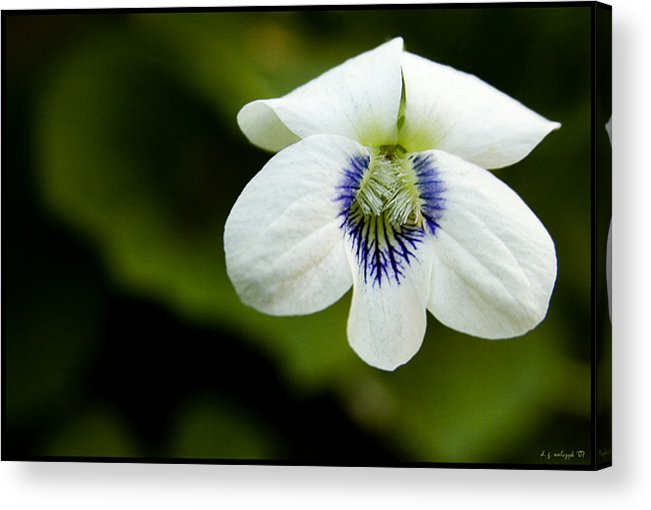 Flora Acrylic Print featuring the photograph Tiny Dancer No 2 by Daniel G Walczyk