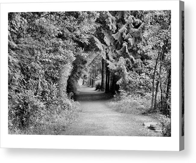 Tunnel Acrylic Print featuring the photograph Forest Tunnel by J D Banks