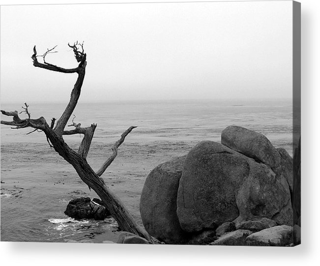 Tree Acrylic Print featuring the photograph Tree And Boulder by Kenna Westerman