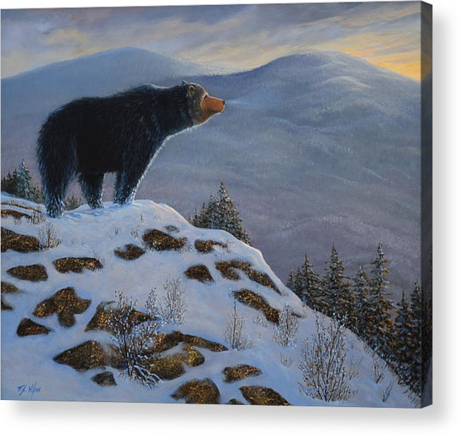 Wildlife Acrylic Print featuring the painting Last Look Black Bear by Frank Wilson