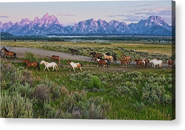 Horizontal Acrylic Print featuring the photograph Horses Walk by Jeff R Clow